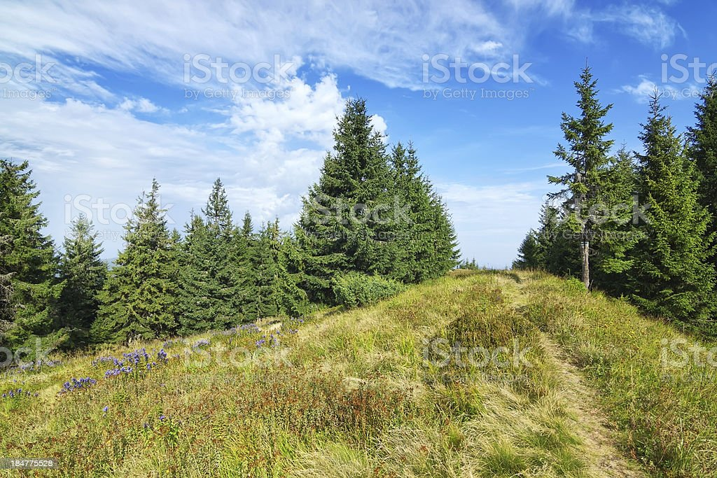 Path pathway middle of the forest and green grass. royalty-free stock photo