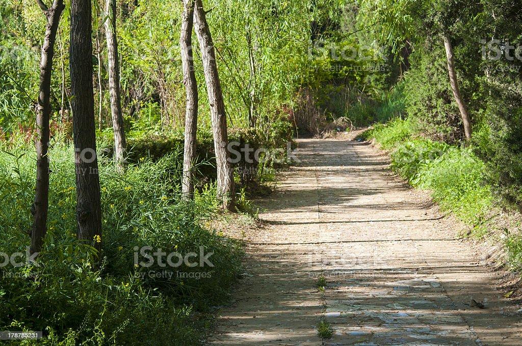 path royalty-free stock photo