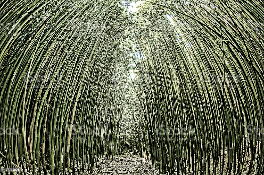 Path through a bamboo forrest on Maui, Hawaii, USA stock photo