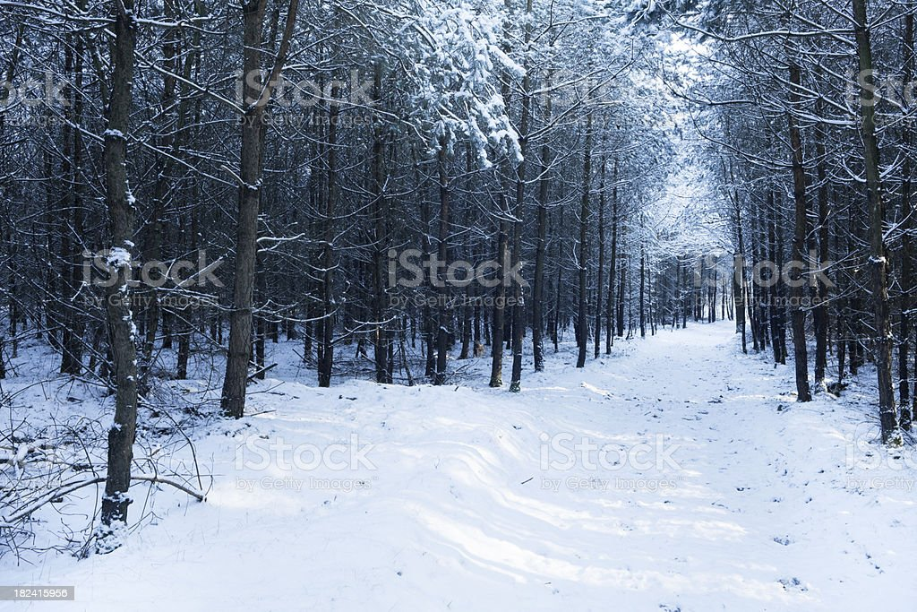 Path through a forest in The Netherlands in winter royalty-free stock photo