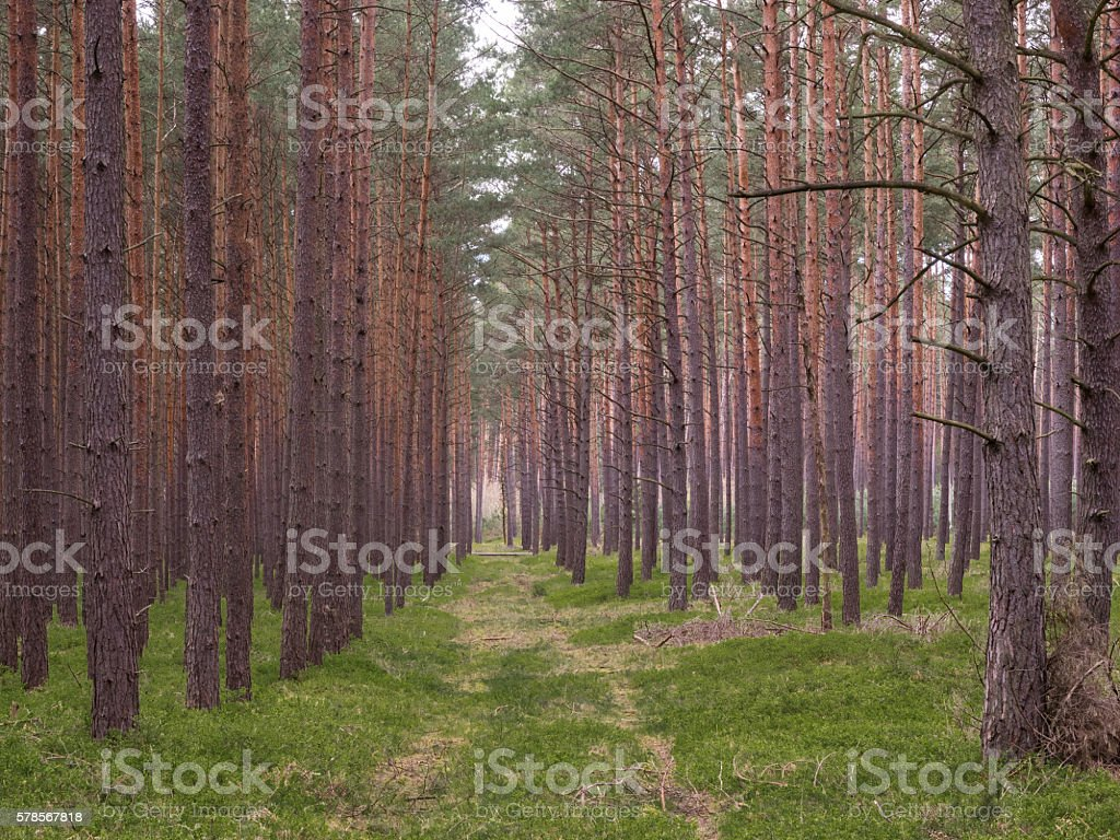 Path through a forest stock photo