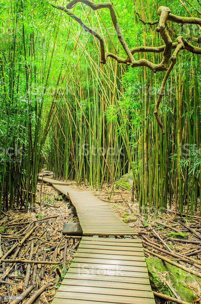Path through a Green Bamboo Forest stock photo