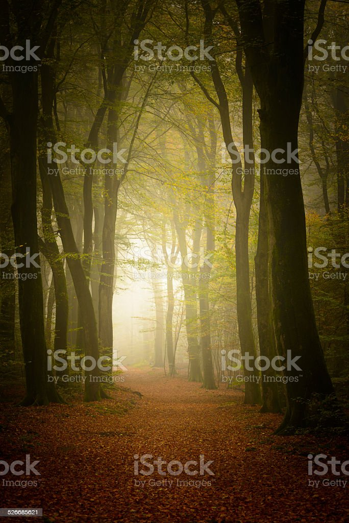 Path through a misty forest stock photo