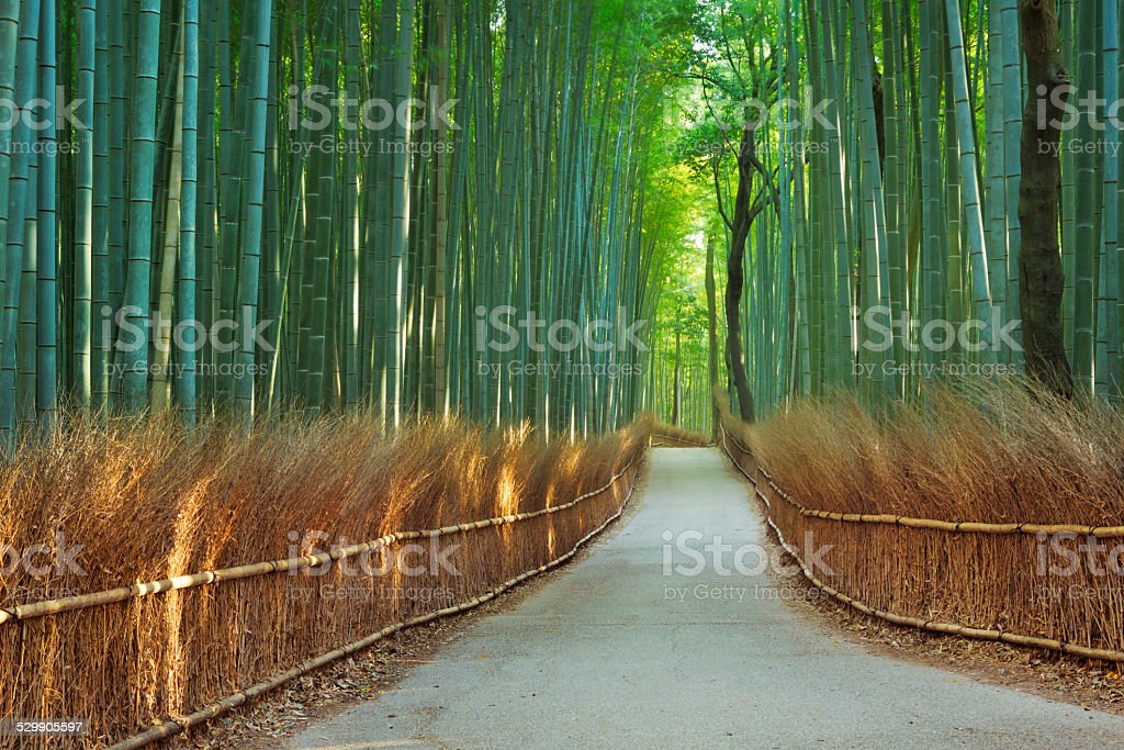 Path through Arashiyama bamboo forest near Kyoto, Japan stock photo