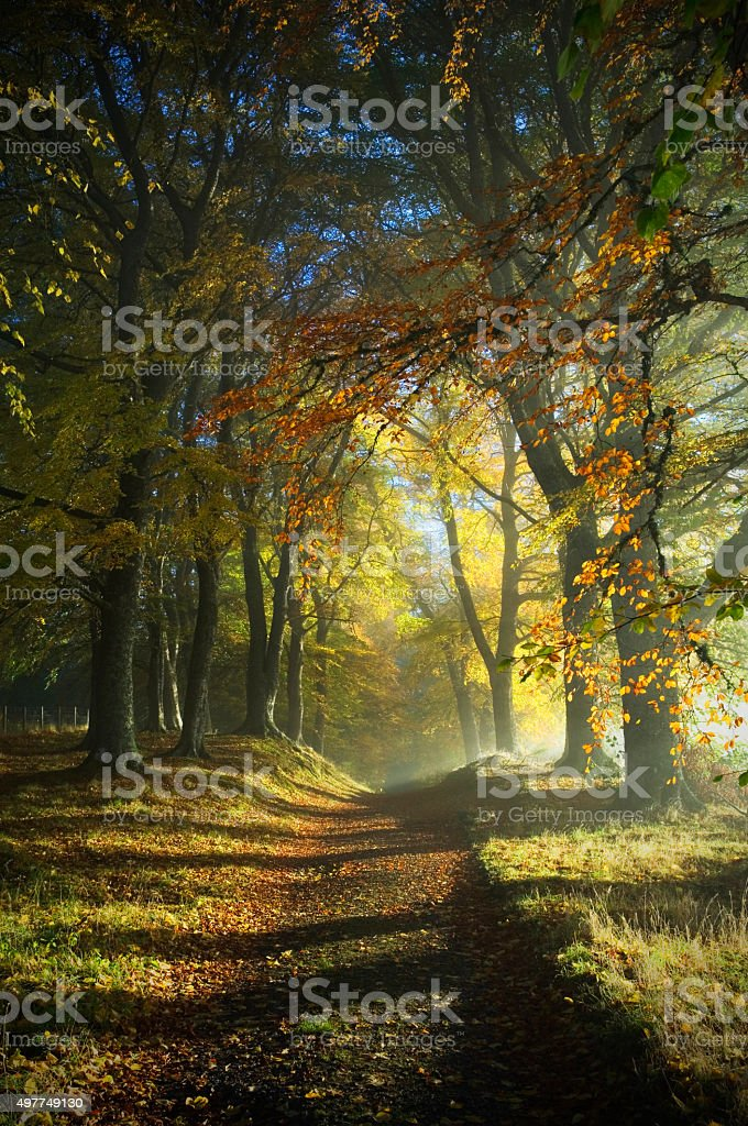 Path through autumn woods stock photo