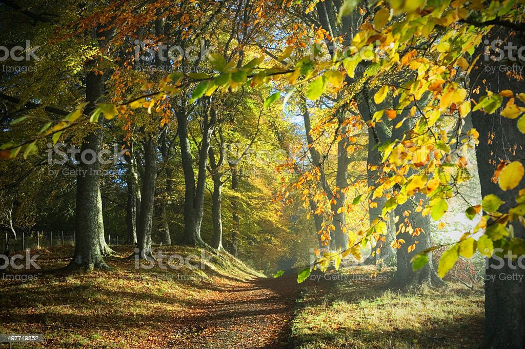 Path through autumn woods stock photo