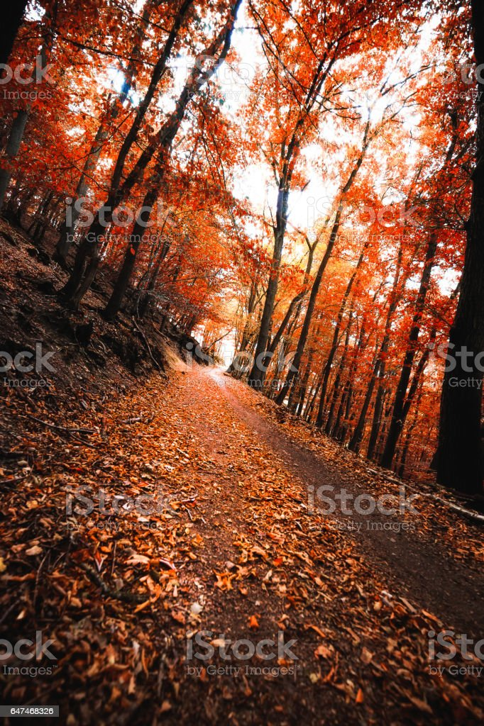 Path through autumnal forest stock photo
