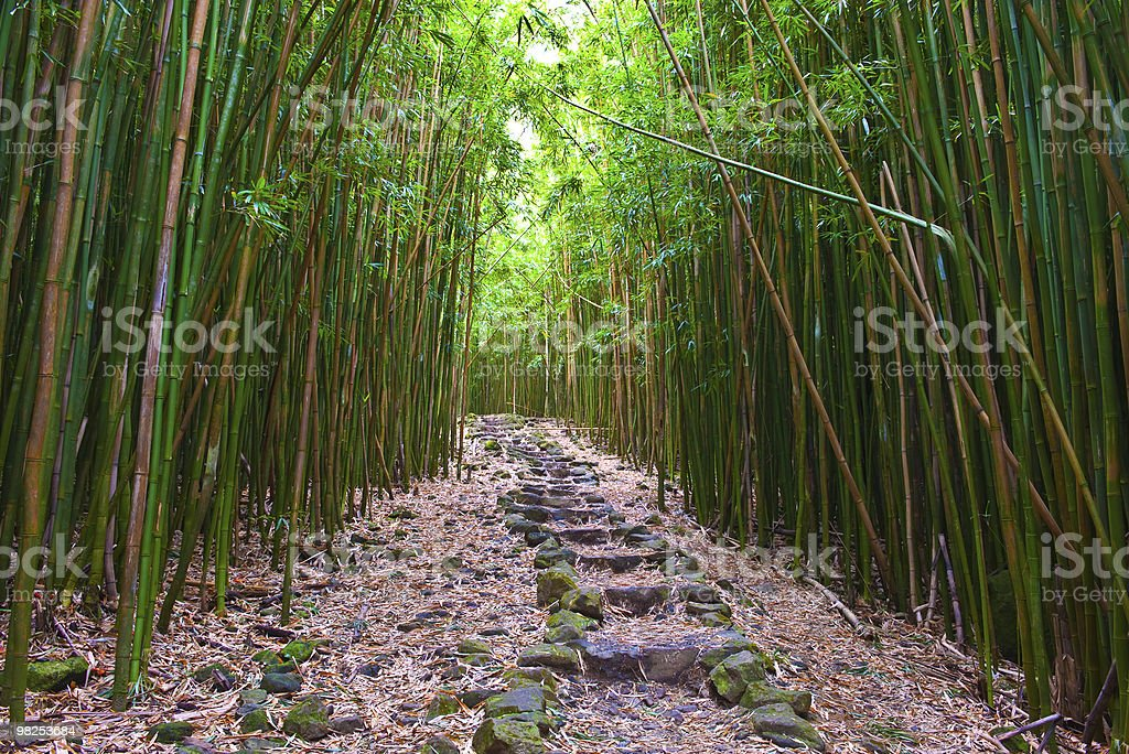 Path through bamboo rain forest in Hawaii stock photo