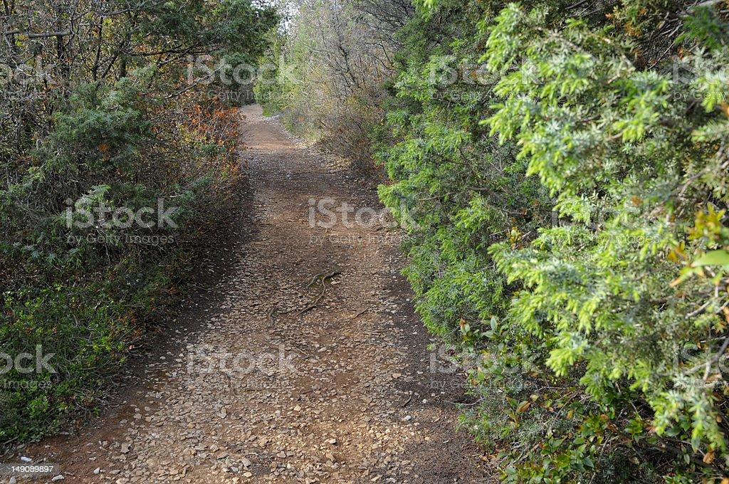 Path through bushes royalty-free stock photo