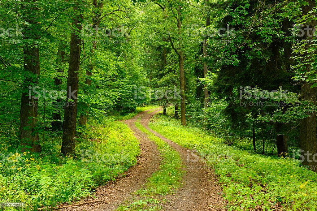Path through Deciduous Forest stock photo