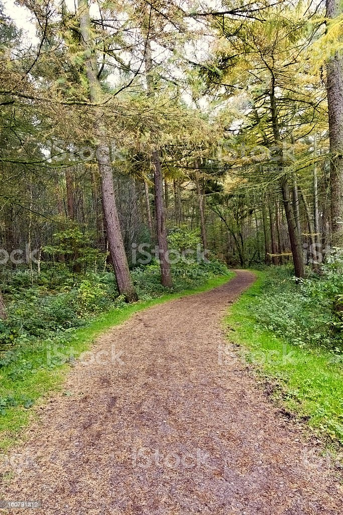 Path through Delamere forest, Cheshire royalty-free stock photo