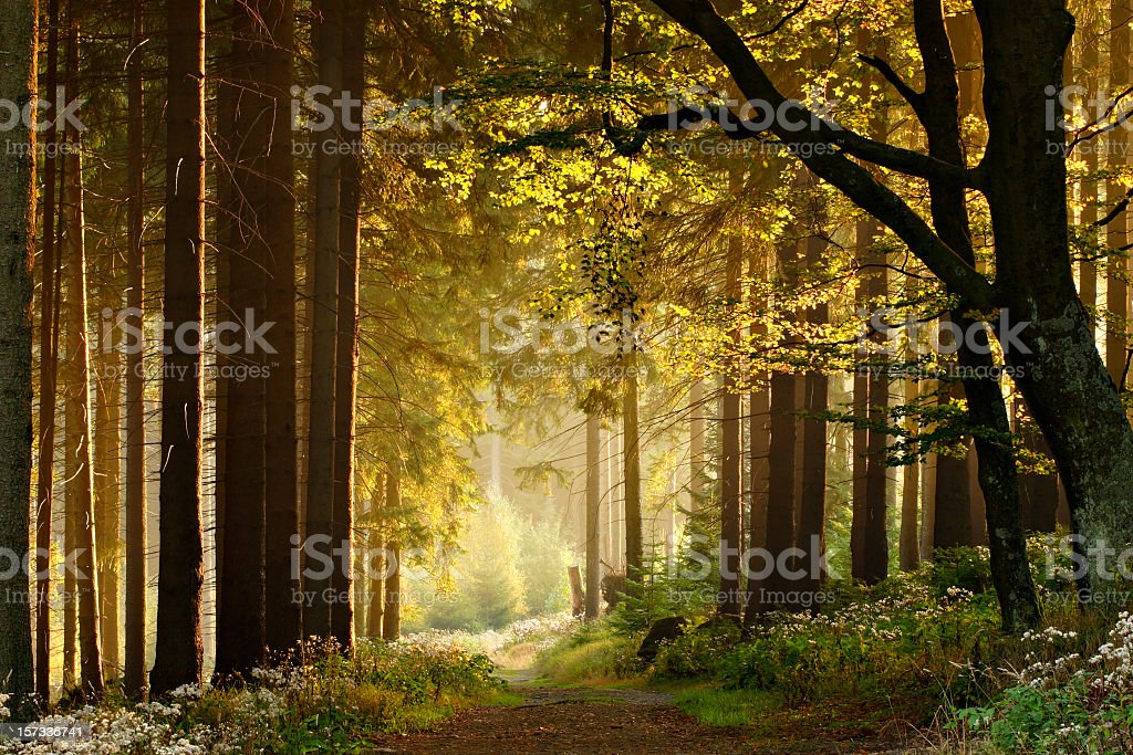 Path through Enchanted Autumn Forest royalty-free stock photo