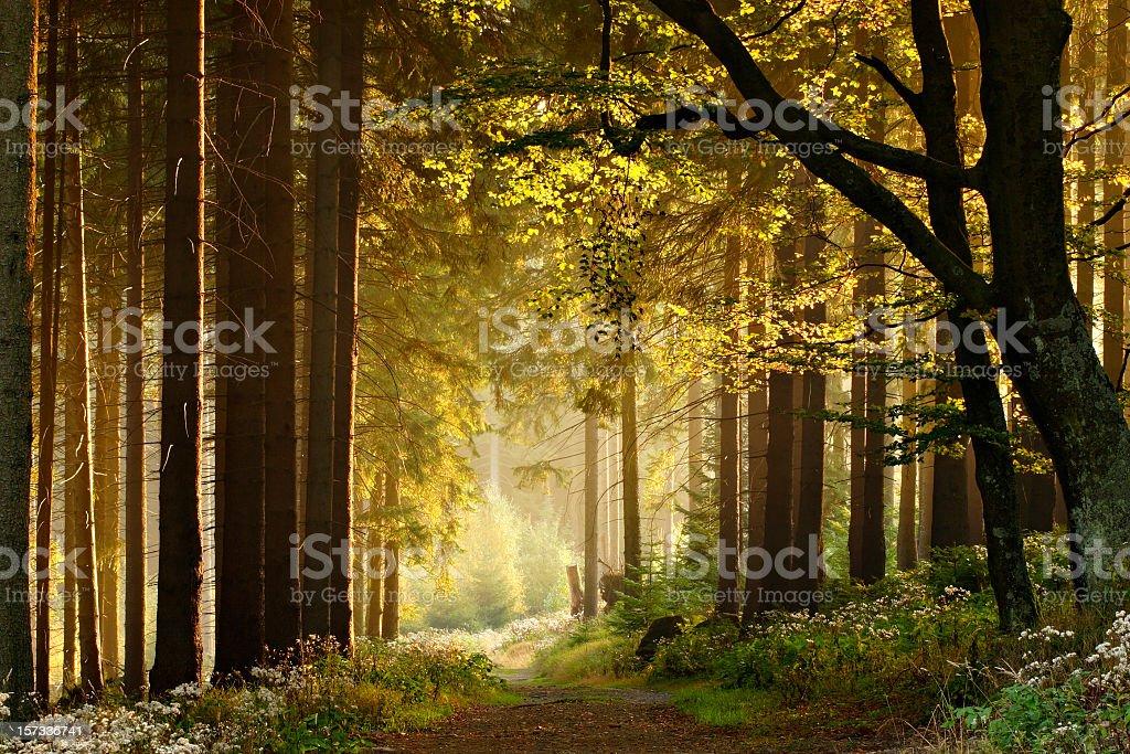 Path through Enchanted Autumn Forest stock photo