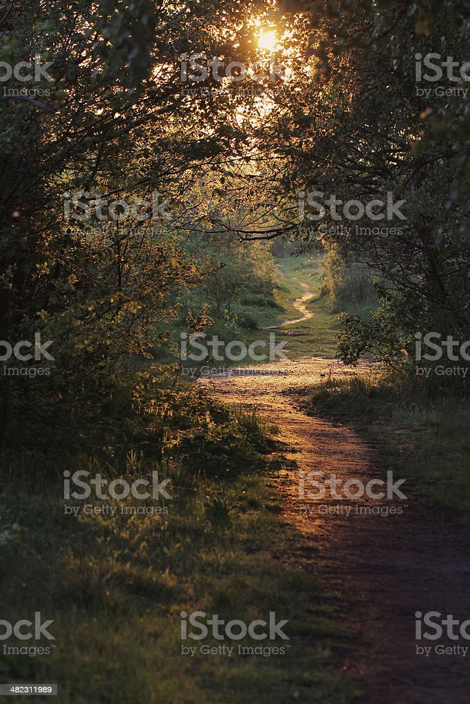 Path through Enchanted Autumn Forest stock photo