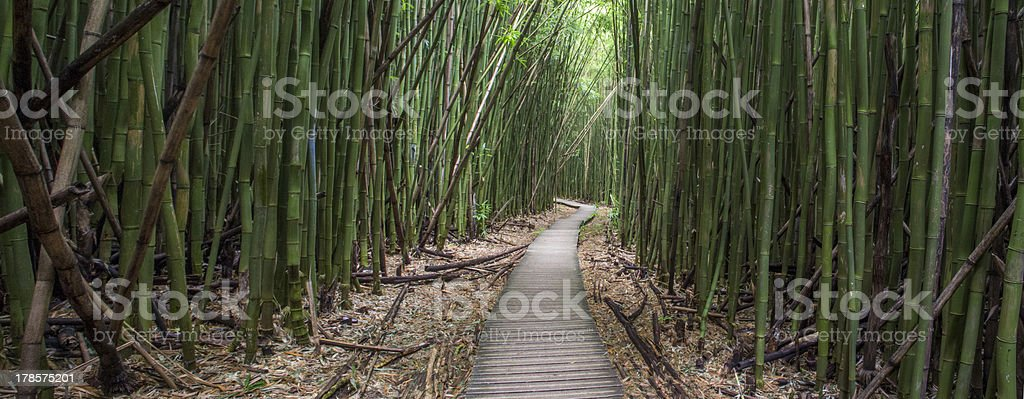 Path through Enchanted Bamboo Forest stock photo