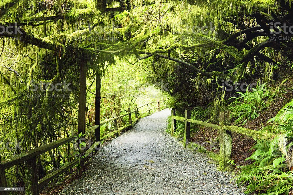 Path Through Humboldt Redwoods State Park royalty-free stock photo