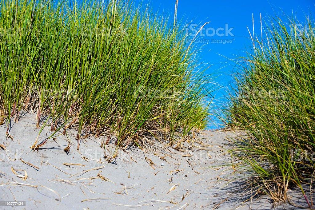 Path through juicy green grass on sand dunes coast stock photo