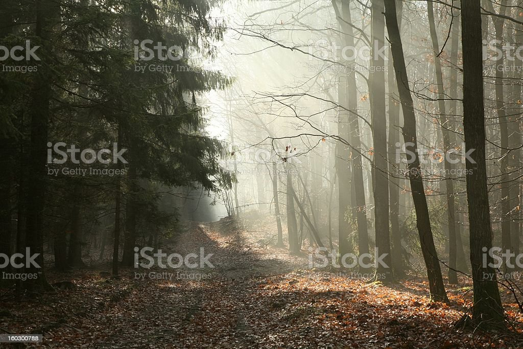 Path through late autumn forest royalty-free stock photo