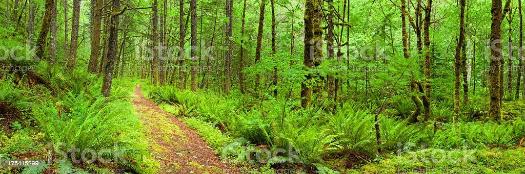 Path through lush rainforest, Columbia River Gorge, Oregon, USA royalty-free stock photo