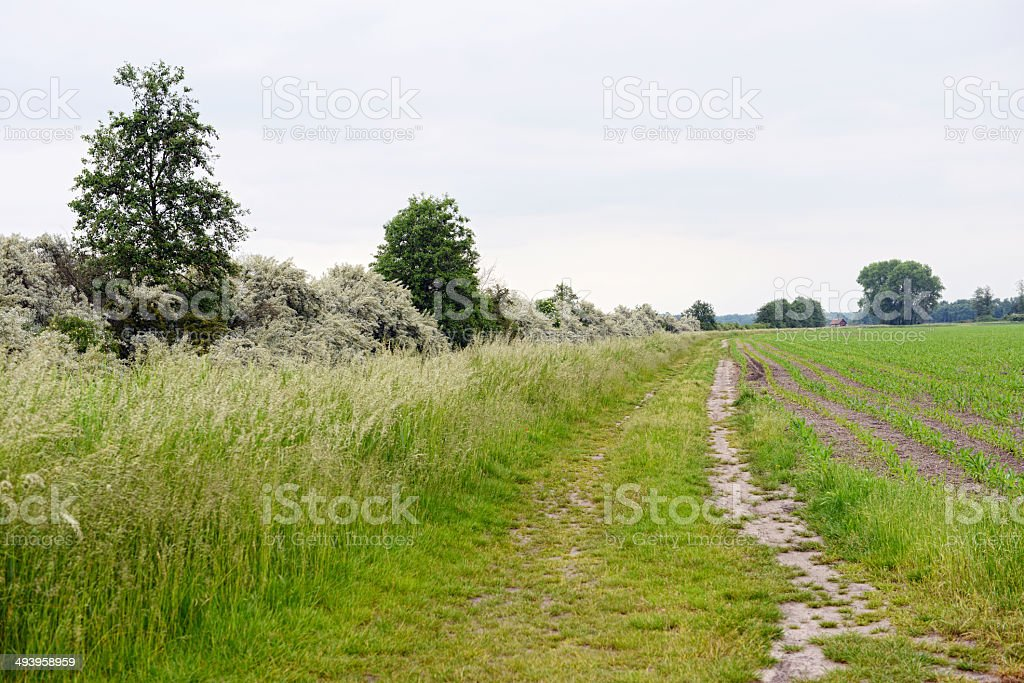 path through meadow landscape stock photo