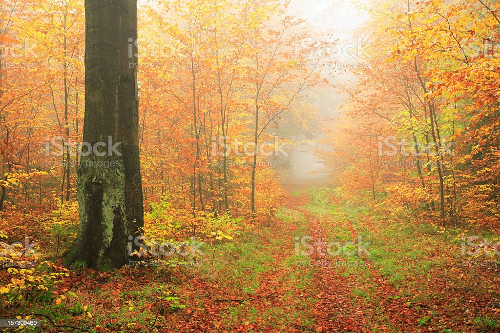 Path through Misty Autumn Forest stock photo