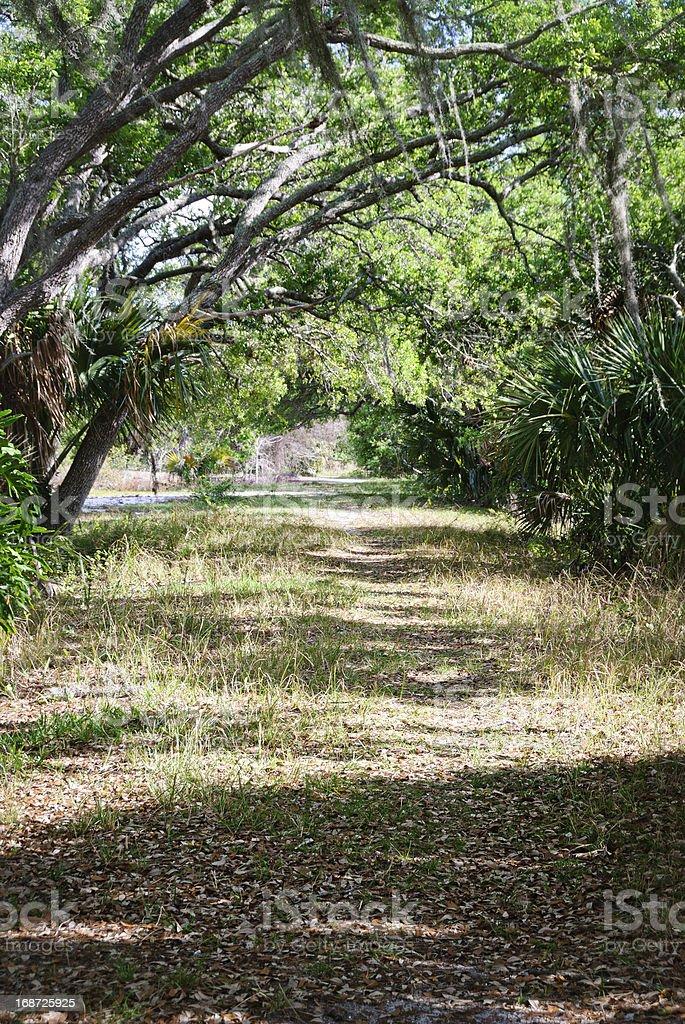 Path through pine flat woods, live oak in savanna stock photo