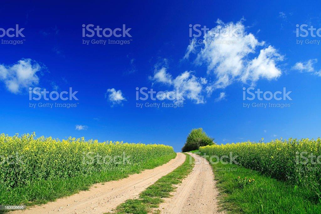 Path through Rape Field royalty-free stock photo