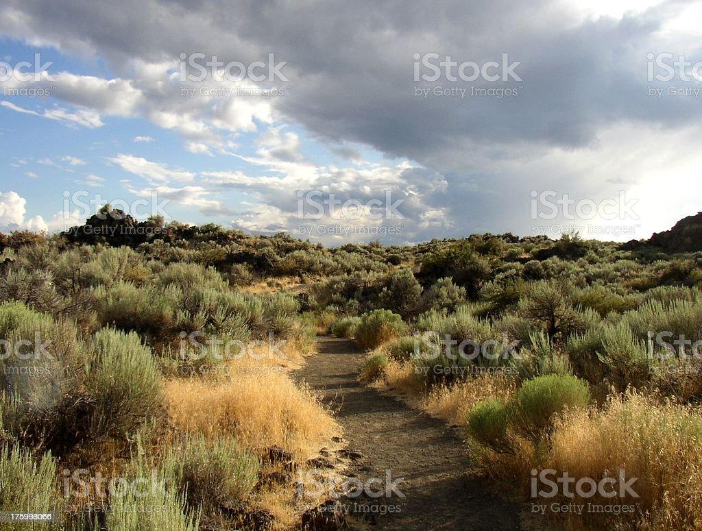 path through sagebrush stock photo