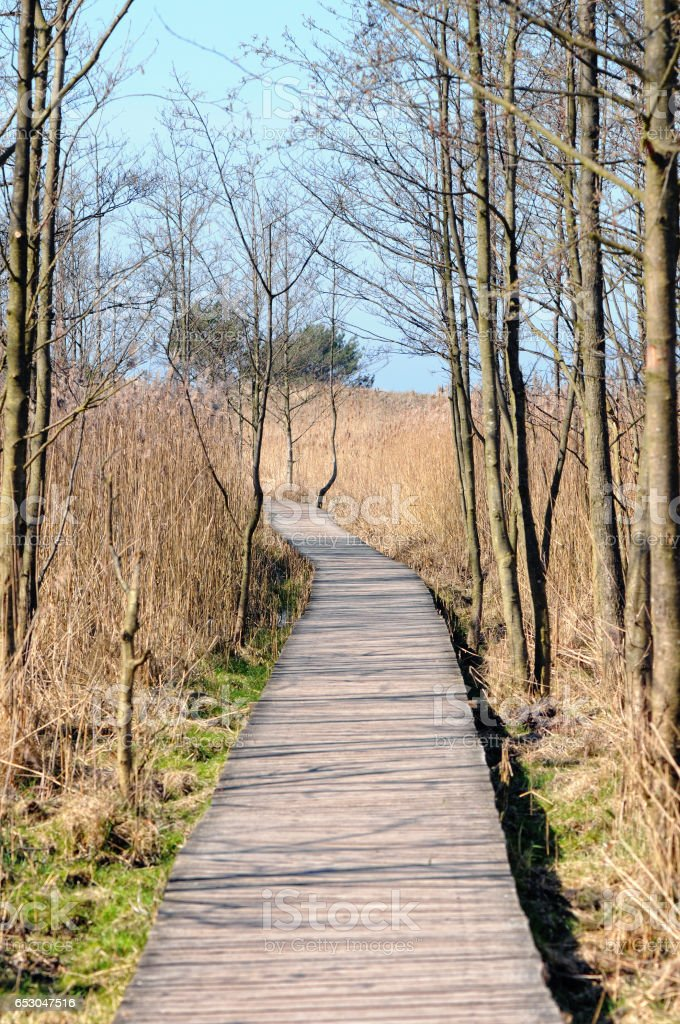 path through Swamp forest at Baltic sea Landscape (Darsser Ort - Germany) stock photo