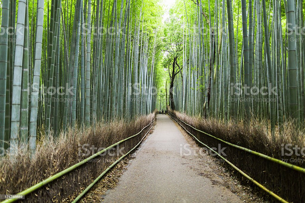 Path through tall bamboo groves in Japan stock photo