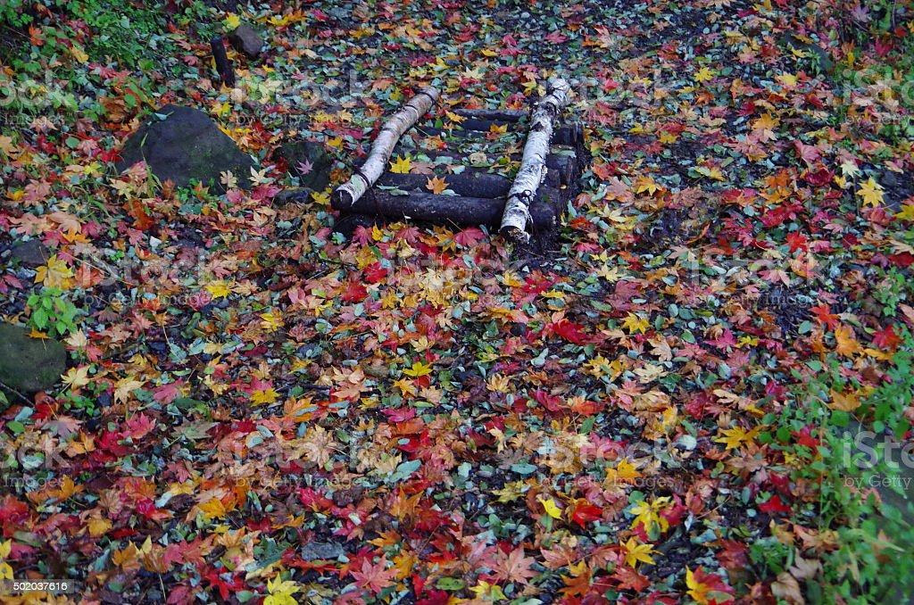 Camino en el bosque de otoño foto de stock libre de derechos