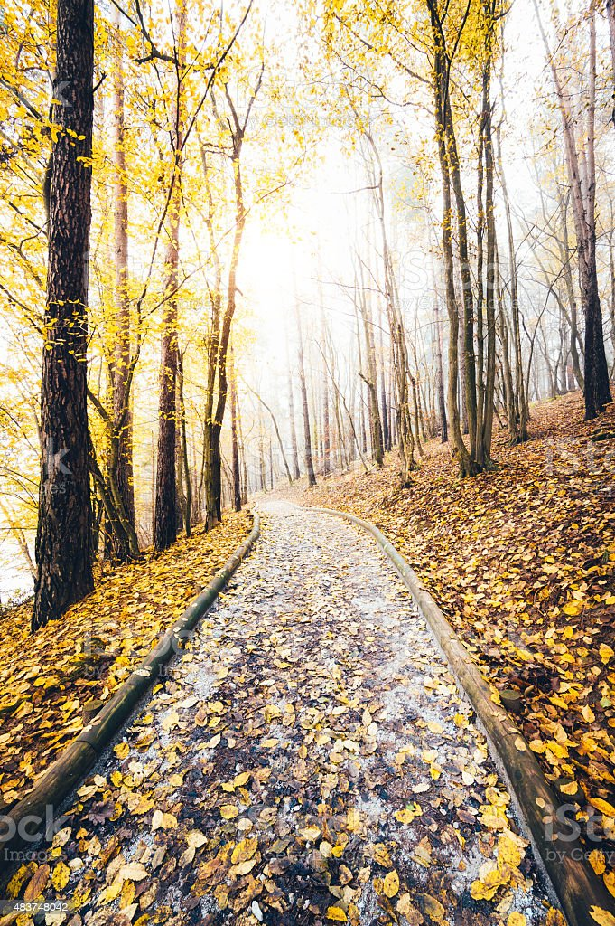 Path Through The Colorful Autumn Forest stock photo