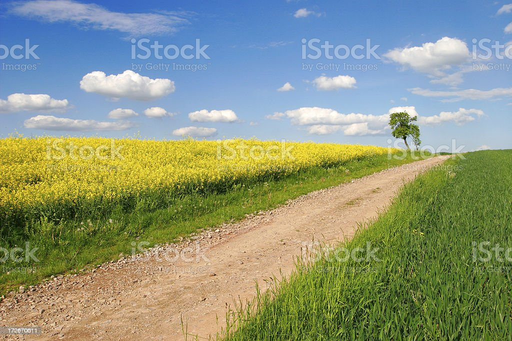 Path through the fields royalty-free stock photo