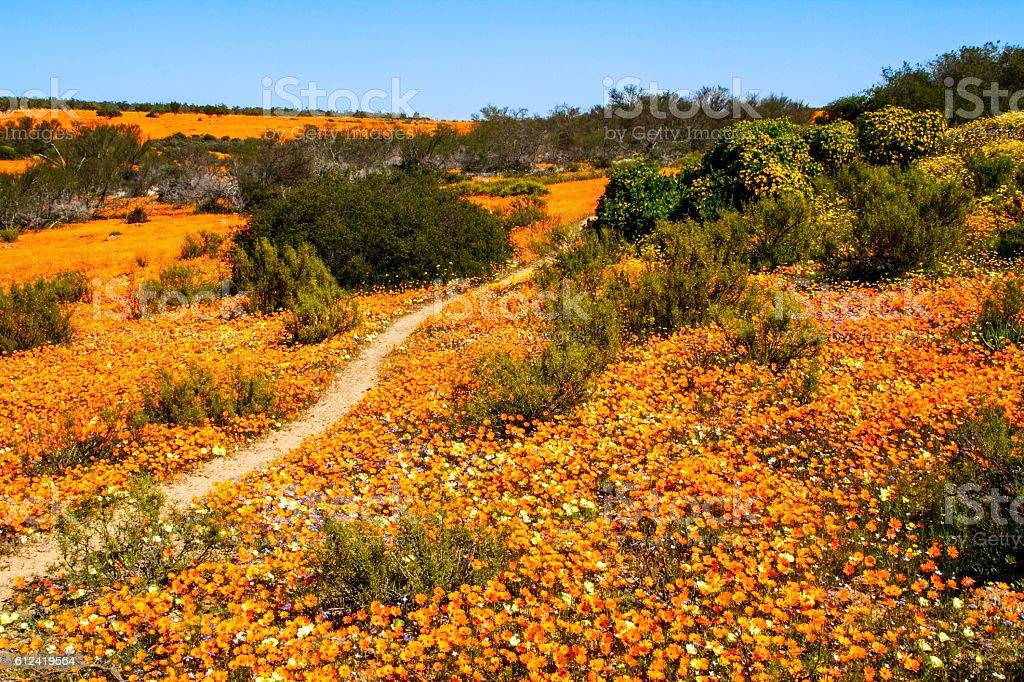 Path through the flowers stock photo