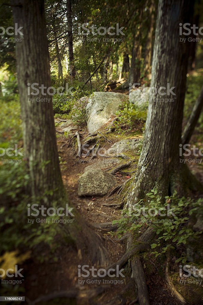 Path through the forest royalty-free stock photo