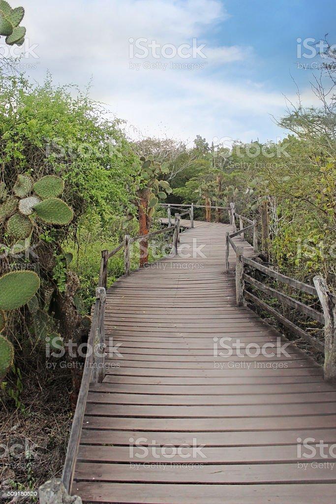 Path Through the Galapagos stock photo