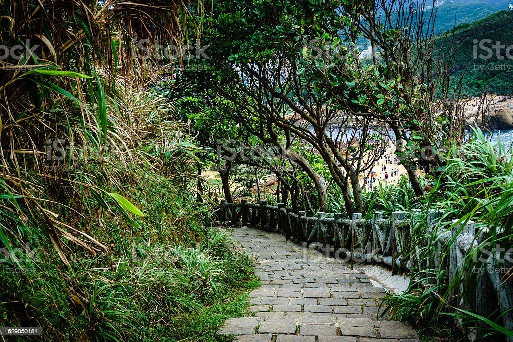 Path Through the Jungle stock photo
