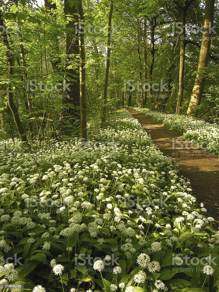 Path through the spring royalty-free stock photo