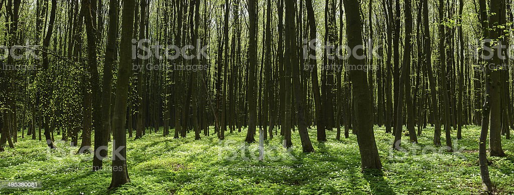 Path through the sunny spring forest stock photo
