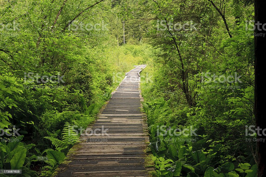 Path through the woods stock photo
