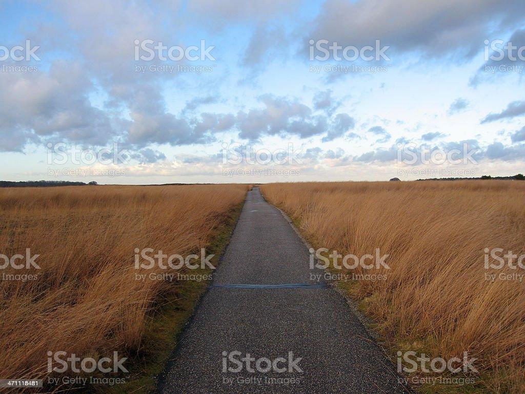 Path through Veluwe stock photo