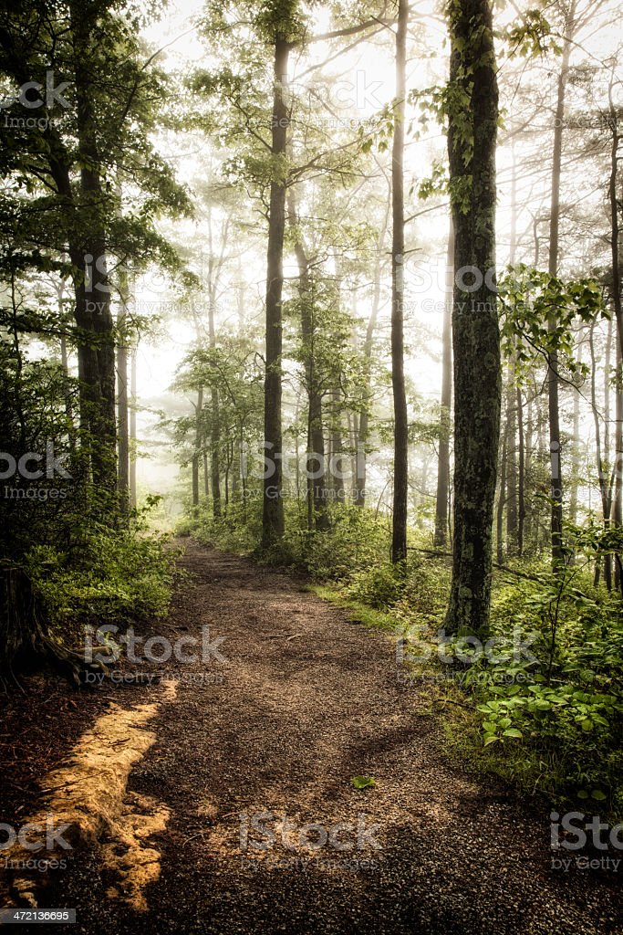 Path Through Virgin Forest stock photo