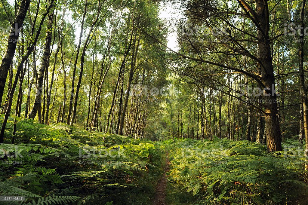 Path Through Woods - Stock Photo stock photo