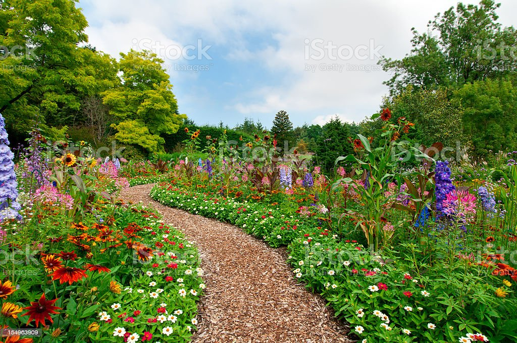 Path thru lush summer flower garden - I stock photo