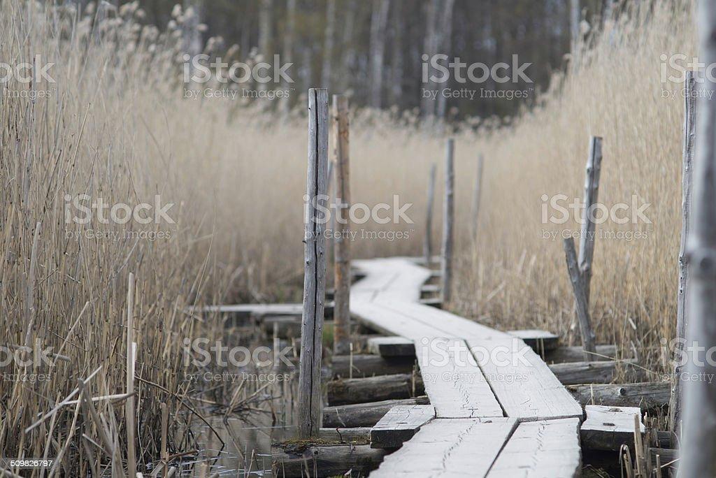 Path thrue reed. stock photo