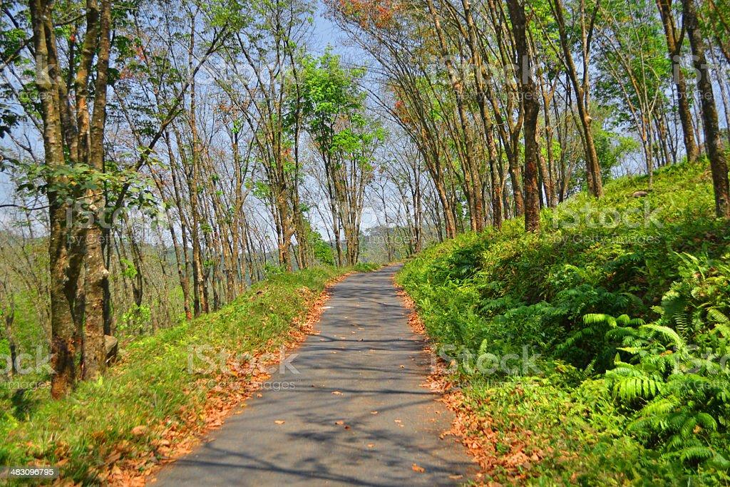 Chemin de Green photo libre de droits