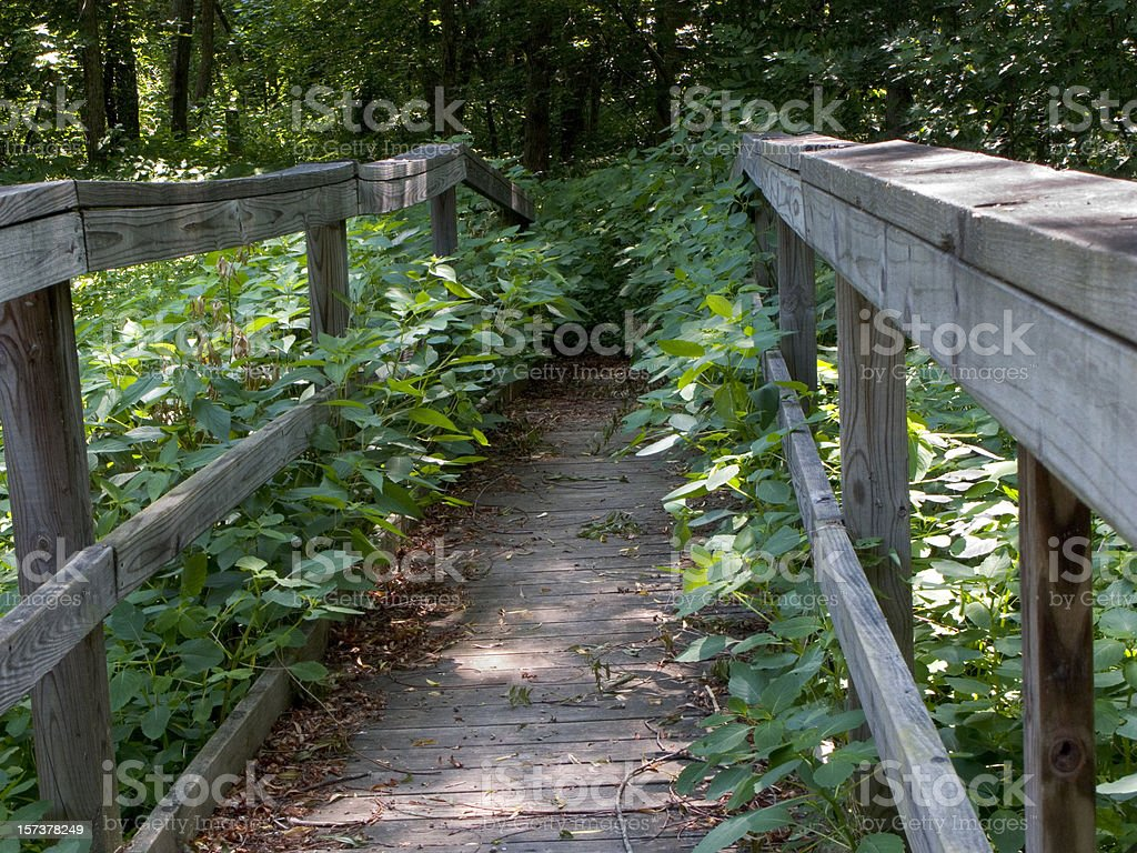 Path To Nowhere Hiking Trail Horizontal stock photo