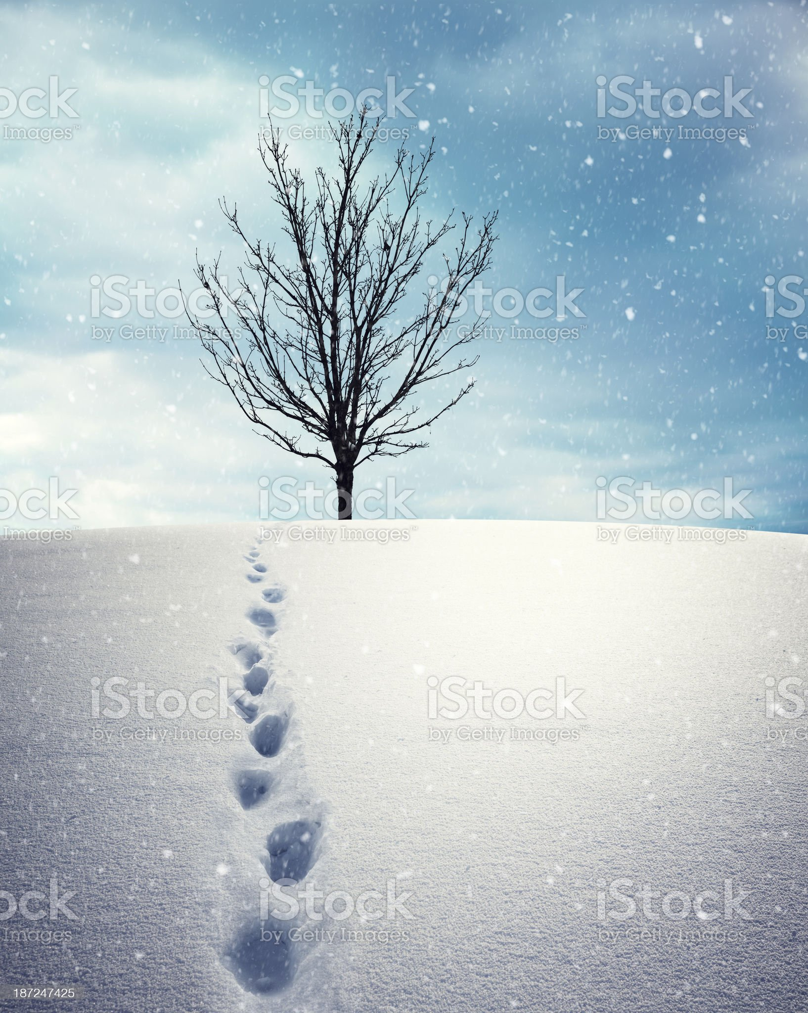 Path To The Tree royalty-free stock photo