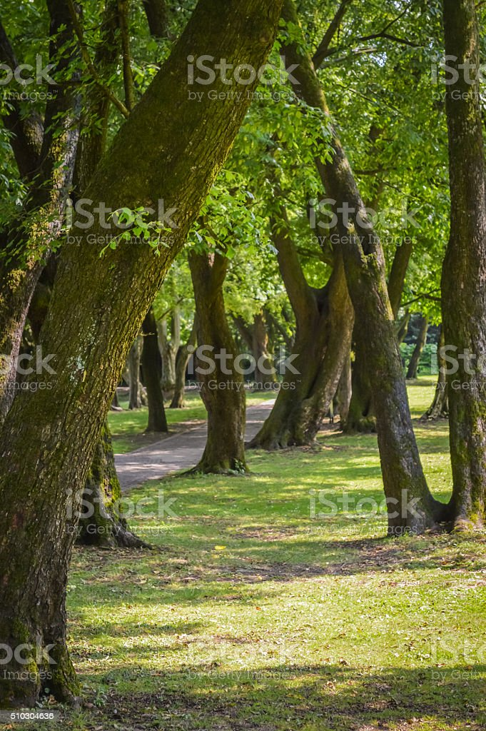 Path under the trees stock photo