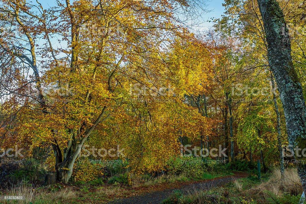 Path Under Trees stock photo
